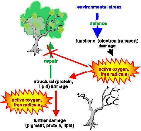 Electron spin resonance dating wikipedia kim